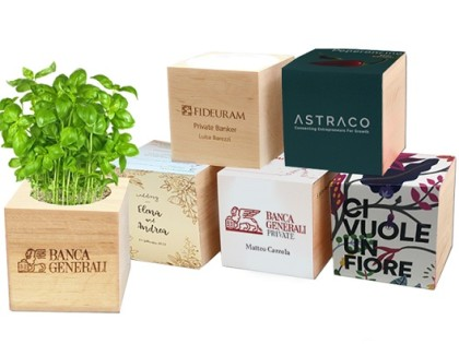 Eco Cube & Eco Organizer <P> Flowers and seedlings in wooden cube